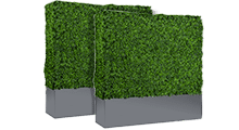 Boxwood Hedge with Planter Box